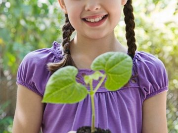 Fifth-graders investigate the difference sunlight and water make to plant growth