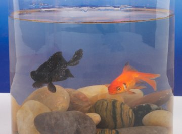 Keeping the correct pH levels in a tank contributes to the health of the fish.