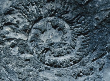 Fossils provide much information about prehistoric organisms.