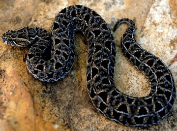 Similarities of Snakes & Lizards