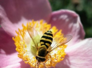 Bees, birds and butterflies facilitate the pollination of flowers.