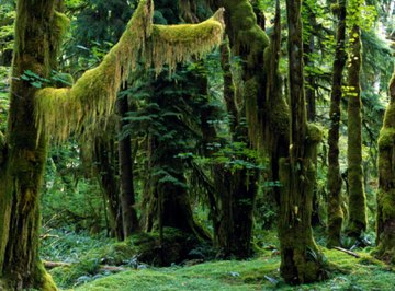 Decomposers are essential parts of the the rainforest ecosystem.