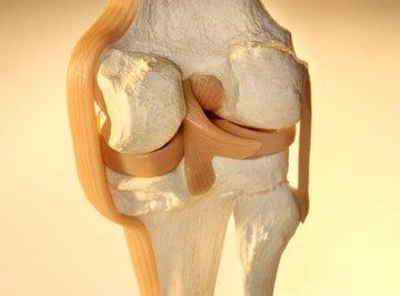 Ligaments and tendons are dense connective tissues made of collagen.