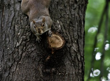 How to Find Squirrel Nests