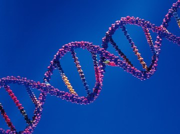 Understanding DNA is at the core of biotechnology advancements.