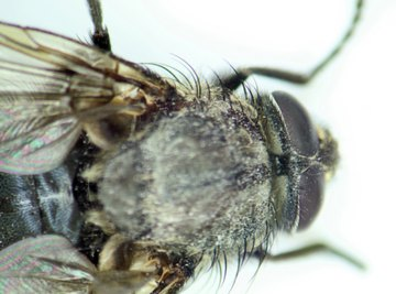 List of Insects That Eat Dead Flesh
