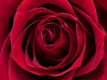You can use red roses to create a pink ink.
