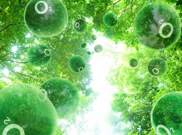 Plants produce the oxygen that animals need to breathe.