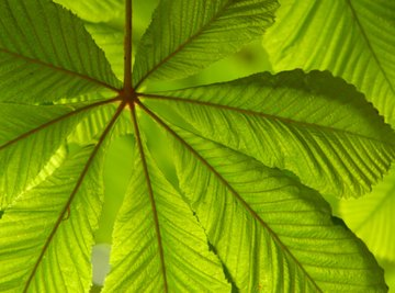 What Organisms Carry Out Photosynthesis