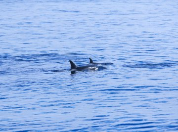List & Describe Four Aquatic Ecosystems