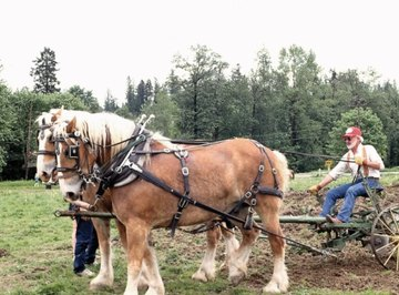 A two-horsepower plow.