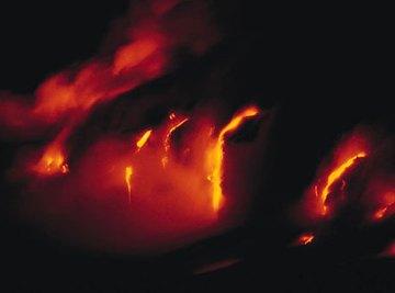 Animal Adaptations Around Volcanoes