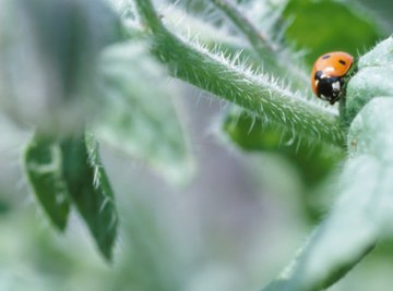 Most species of insects feed on plant matter.