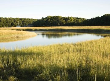 Maine has wetlands known as salt marshes.