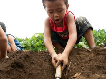 Soil provides the minerals plants require to thrive.