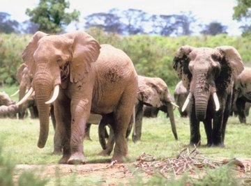 Both the elephants and the plants around them are multicellular.