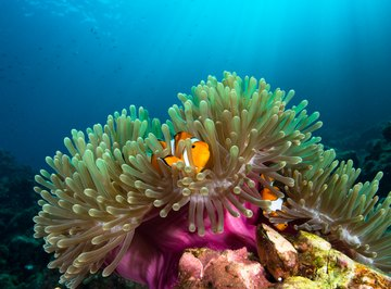 Physical Characteristics of a Sea Anemone