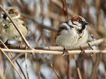 How Do Birds Find Food?