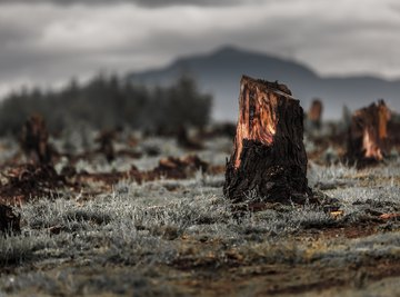 Negative Effects of Biomass