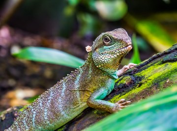 What Is the Difference Between a Newt & a Lizard?