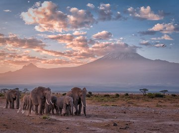 What Kind of Habitat Do Elephants Live in?