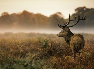 What Kind of Vegetables Do Deer Eat