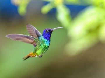 Birds That Drink Hummingbird Water