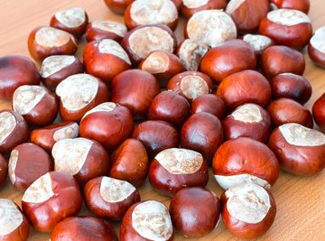 Difference Between a Buckeye Nut & a Horse Chestnut
