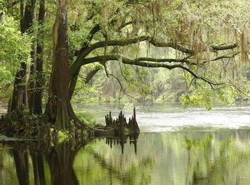 Abiotic Factors in Natural Wetlands