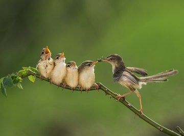 How Many Worms Does a Baby Bird Eat