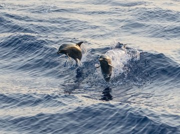 Animals That Live in the Bottlenose Dolphin's Habitat