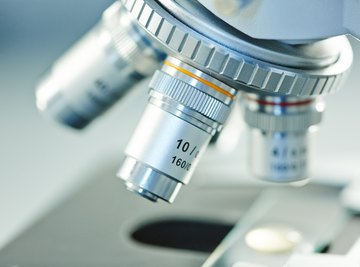 What Are the Different Types of Microscopy Used in a Microbiology Laboratory