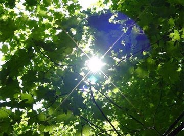 What Happens When a Chlorophyll Molecule Absorbs Light?