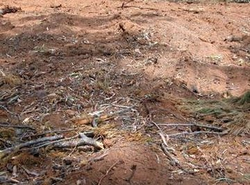 Effects of Land Clearing