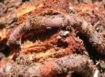 How Do Earthworms Protect Themselves?