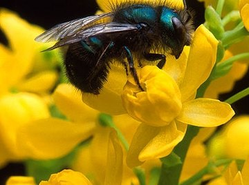 What Flowers Do Bees Like?