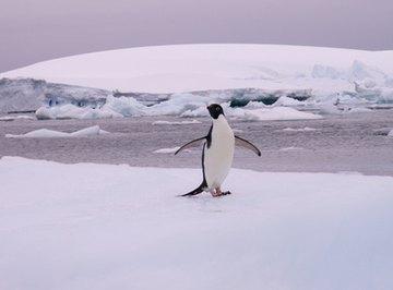 List of Antarctica Animals