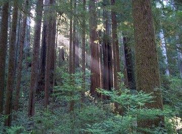 California Coastline Natural Resources