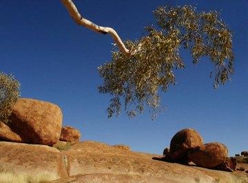Desert Biome Environmental Problems