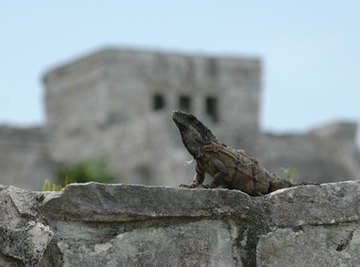 Importance of Reptiles in the Ecosystem