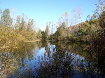 Ponds support many plant species.