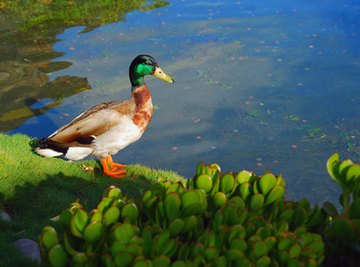 School Pond Ecosystems Projects
