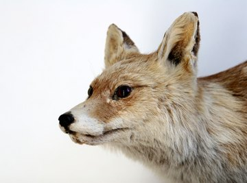Animals That Are Found in Tennessee Ecosystems