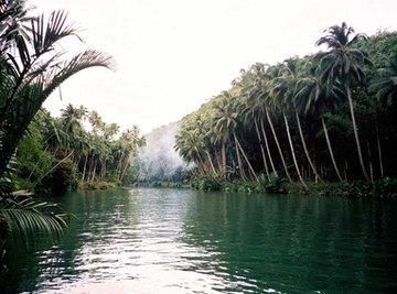 Extinct Animals in the Amazon Rainforest