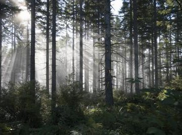 The Importance of the Forest Ecosystem