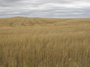 Grassland Biome Facts
