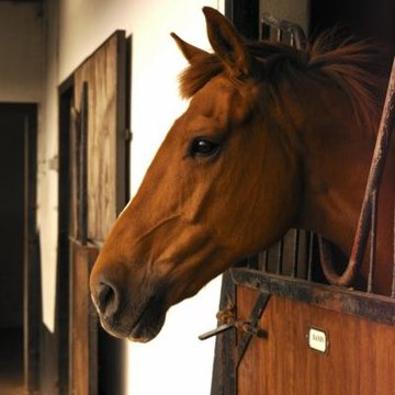 Can a Horse Get Sick From Drinking Stagnant Water? | Animals