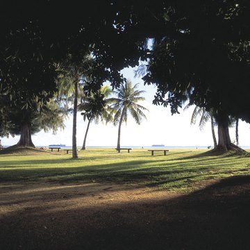 Scenery with benches and palm trees