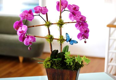 Turn a Plain Store-Bought Orchid into a Spectacular Arrangement