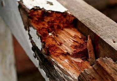 About Wood Rot